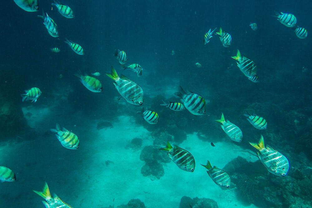 cupofcouple-phuket_banana_beach-snorkel-0006