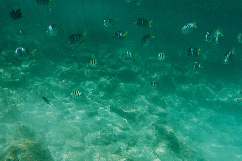 cupofcouple-phuket_banana_beach-snorkel-0013