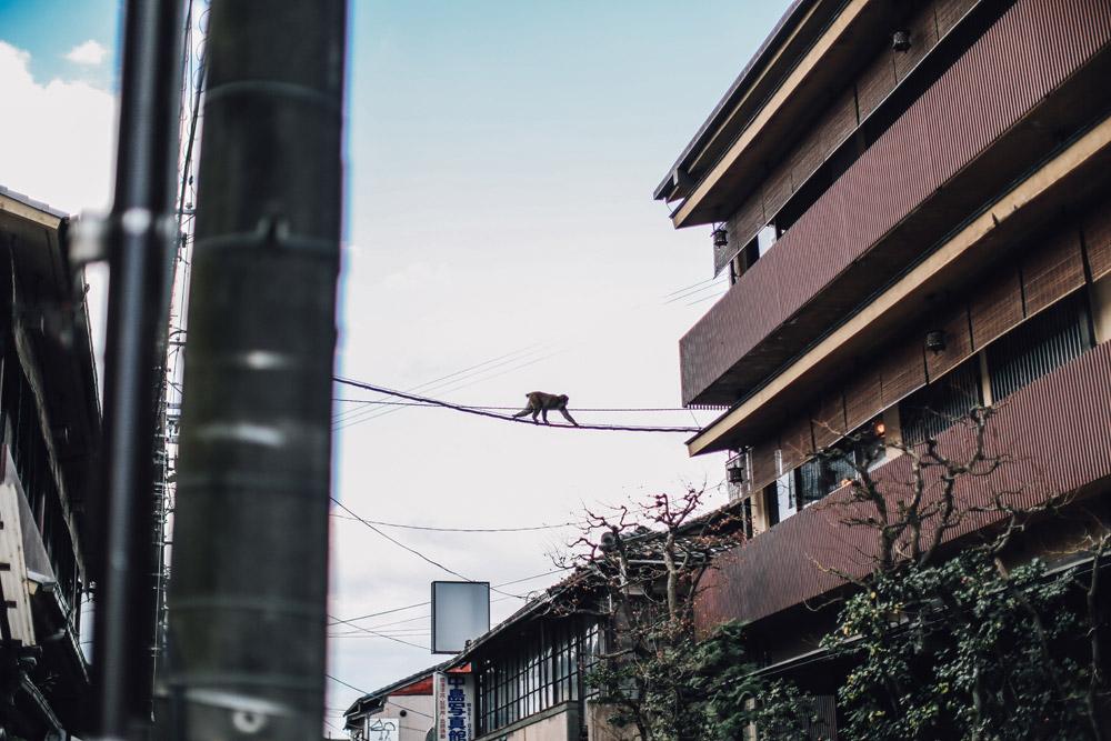kyoto_bosque_de_bambu-cupofcouple-0005