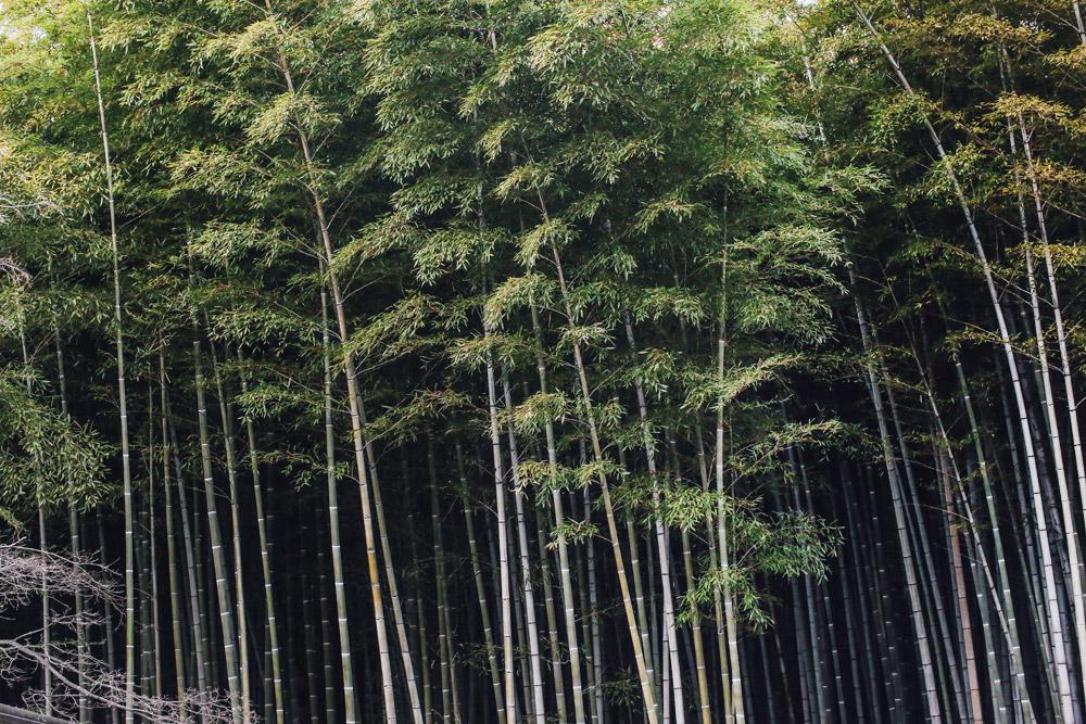 kyoto_bosque_de_bambu-cupofcouple-0013