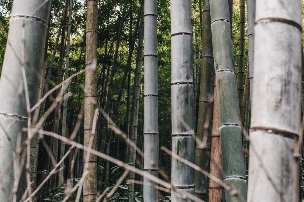 kyoto_bosque_de_bambu-cupofcouple-0015