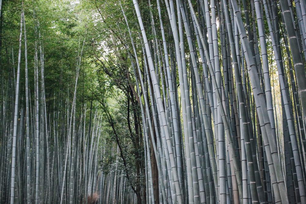 kyoto_bosque_de_bambu-cupofcouple-0017