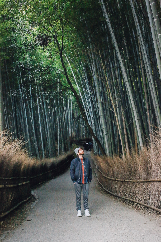 kyoto_bosque_de_bambu-cupofcouple-0018