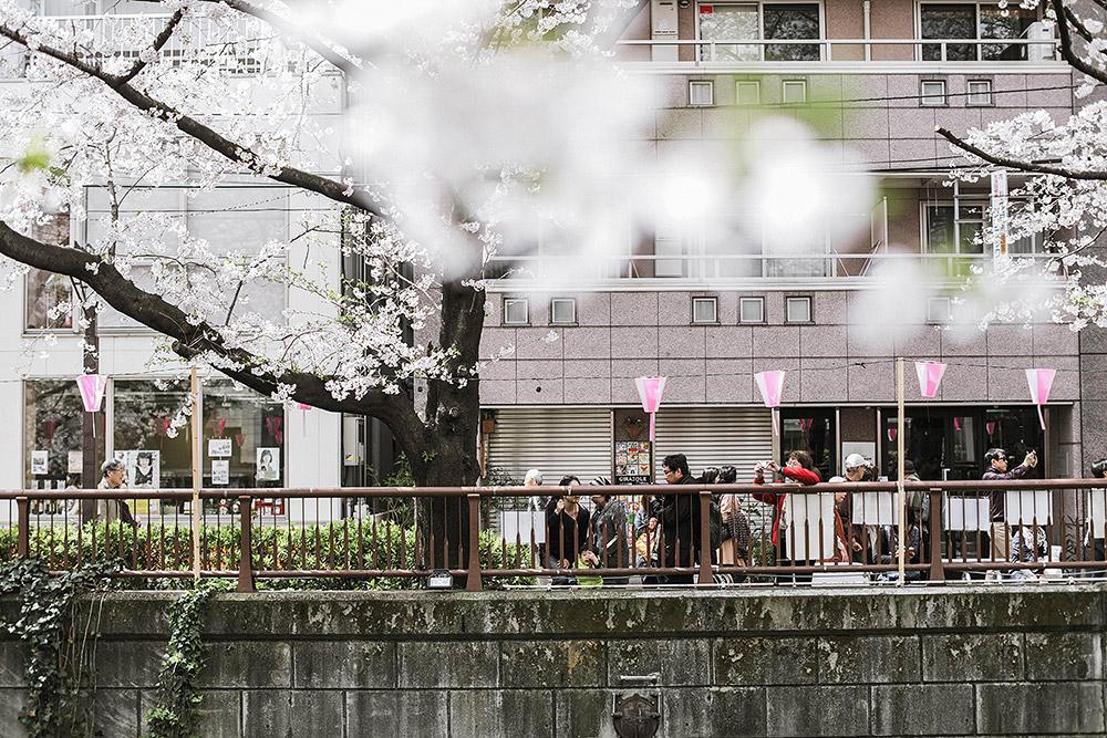 cupofcouple-hanami_tokyo_japan-0007